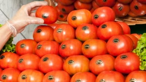 tomatesabrosona_1